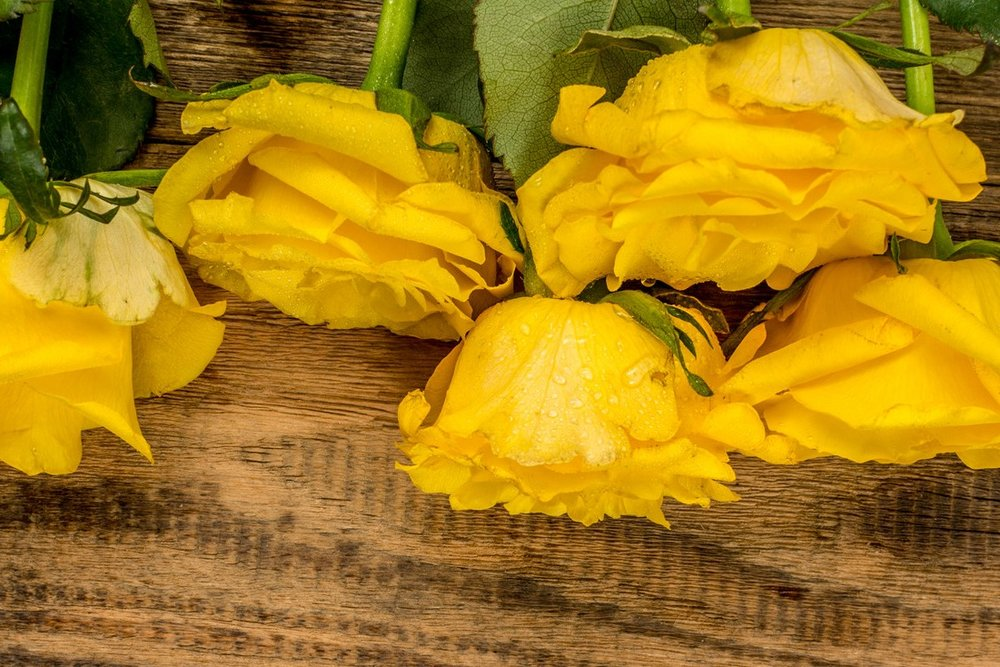 What legacy will you leave? - Learn the story of the yellow roses, and why I'm so passionate about elder law.