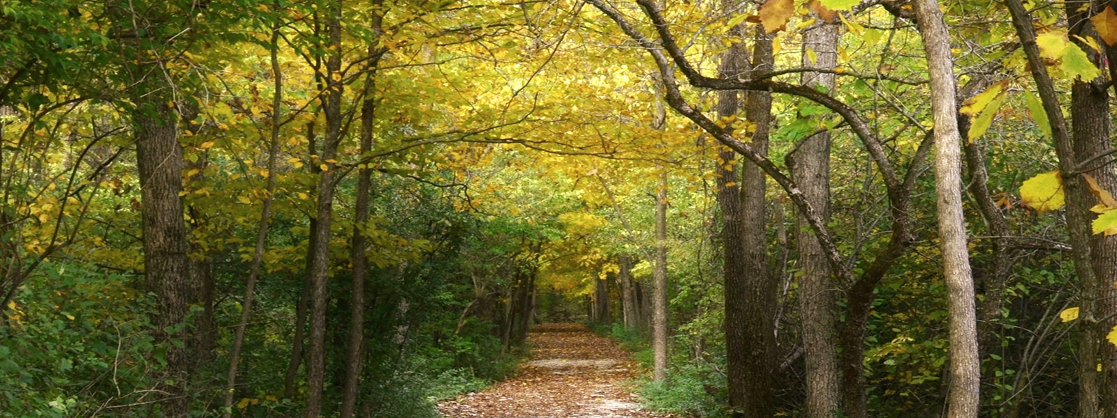 The Ohio Environmental Council Action Fund Endorses The Wood