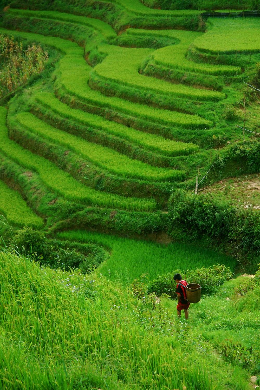 Sapa, Vietnam 2013