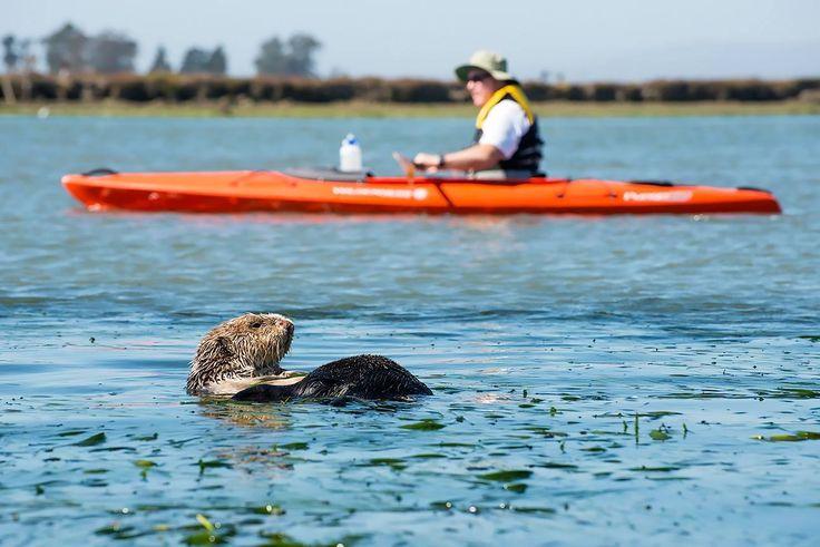 Otter Kayak.jpg
