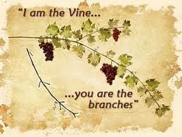 vineandbranch