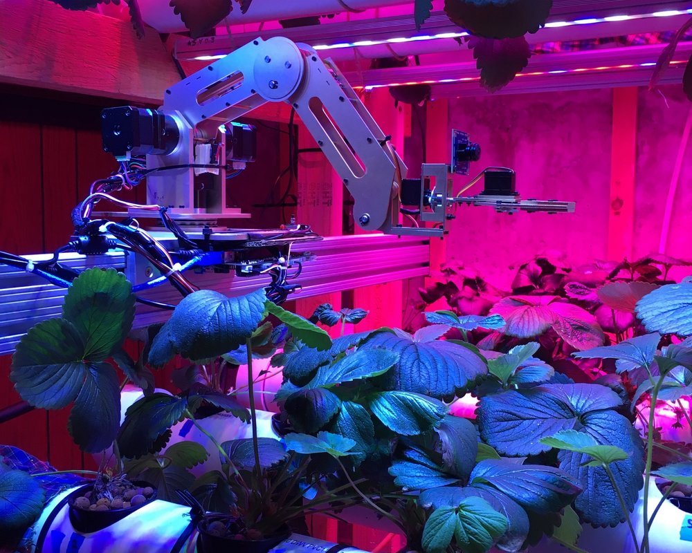 Robotic harvesting -