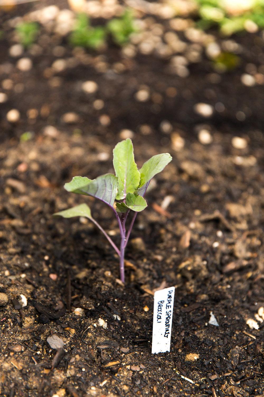 fond life gardening-24.jpg