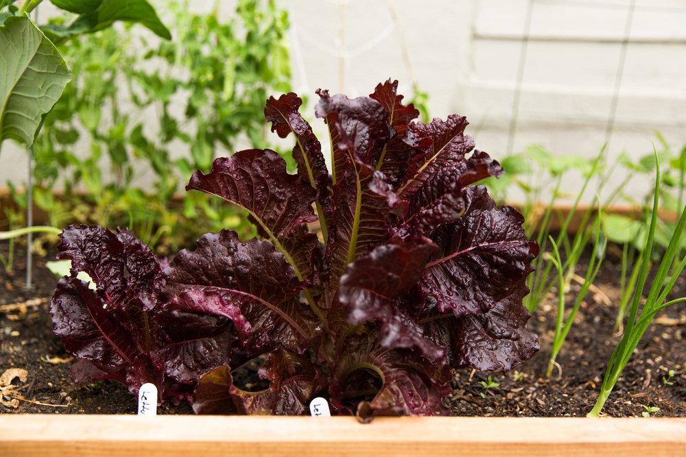fond life gardening-21.jpg