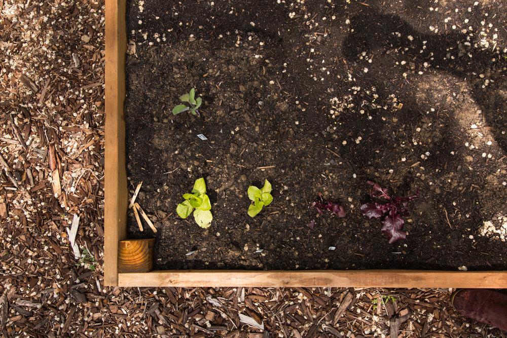 fond life gardening-20.jpg