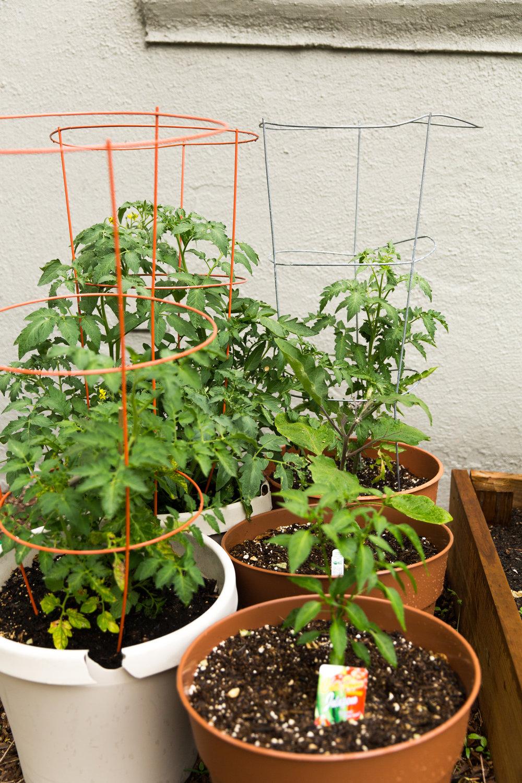 fond life gardening-18.jpg