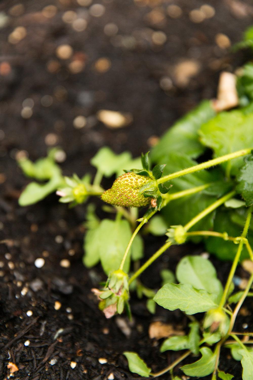 fond life gardening-33.jpg