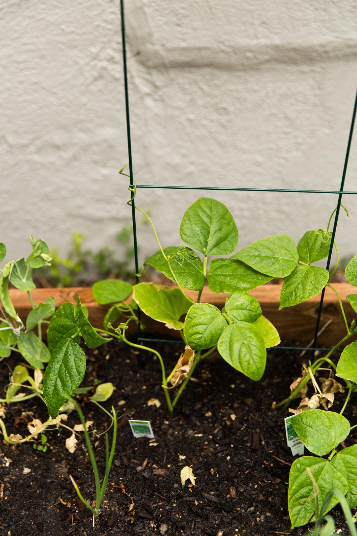 fond life gardening-31.jpg