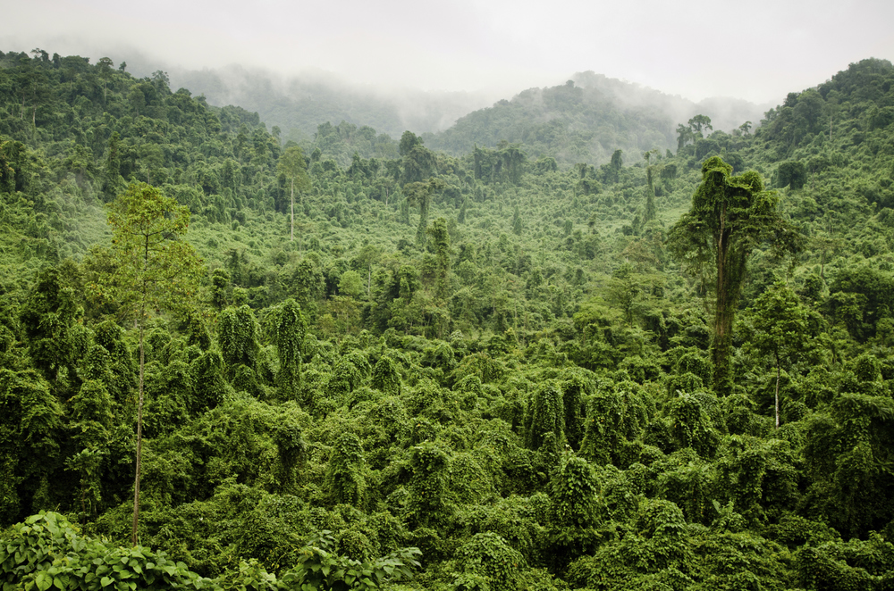 World Land Trust Rainforest - Clean Energy UK Charity Partner