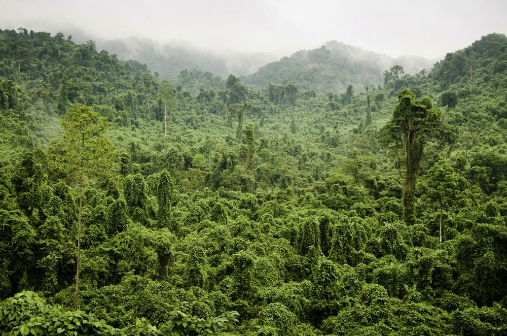World Land Trust Rainforest - Clean Energy UK Charity Partner