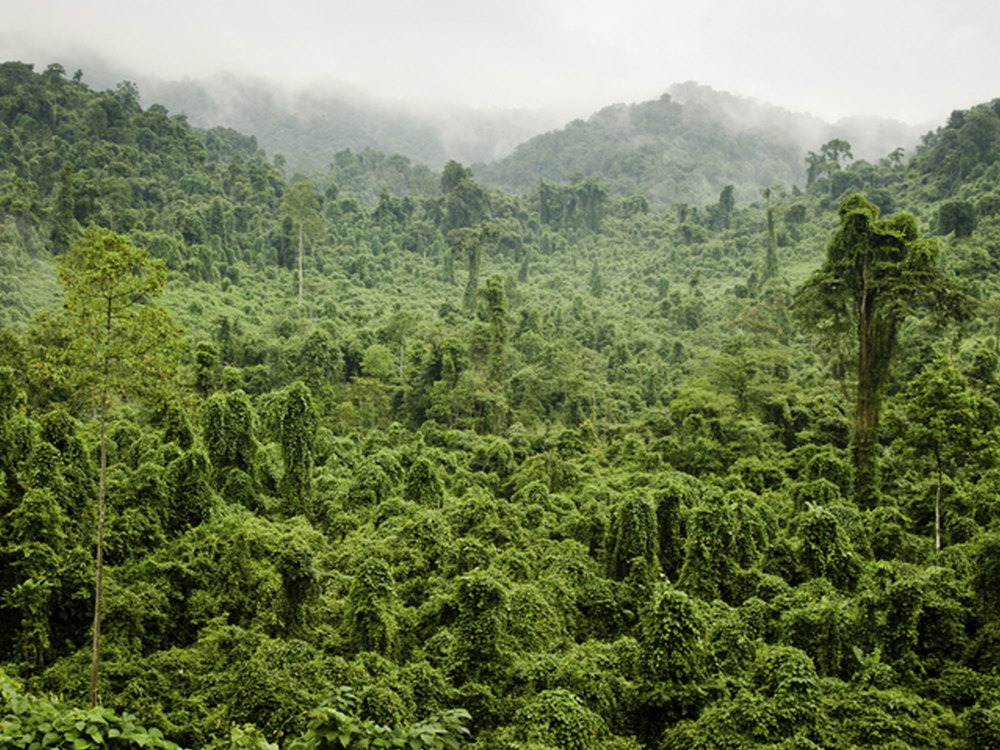 Rainforest protection - Renewable energy brokerage