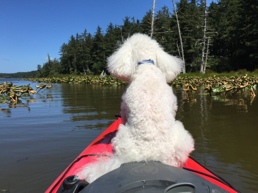 Benny the Navigator