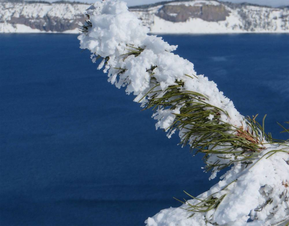 Branch at Crater Lake.jpg