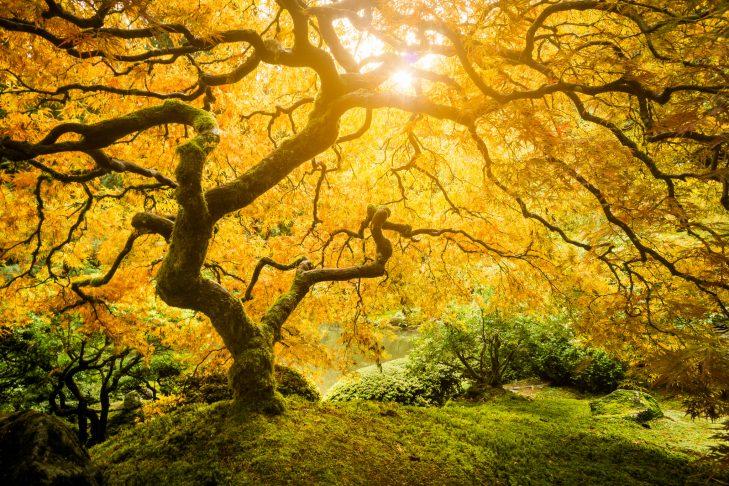Tree in sunlight Brooke Hoyer-Flickr 15760450415_c01fe65426_k-729x486.jpg
