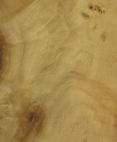 raíz maple