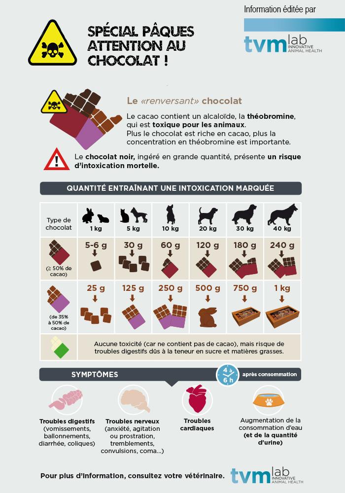 intoxication-chocolat-chien (1).jpg
