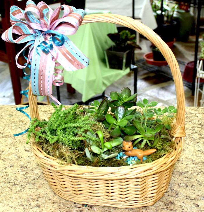 Succulent basket 1