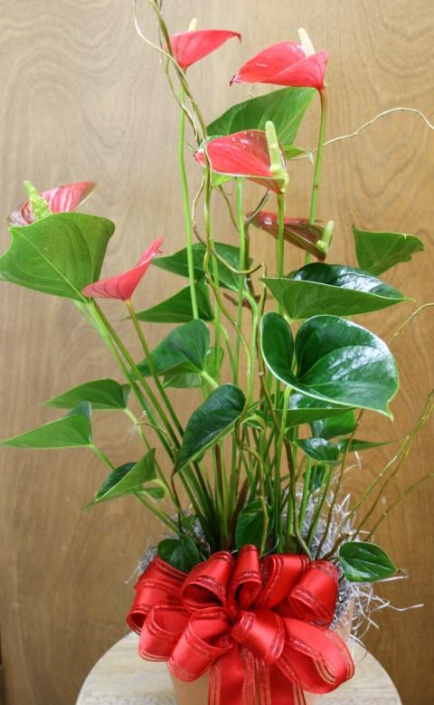Flowering plant 3