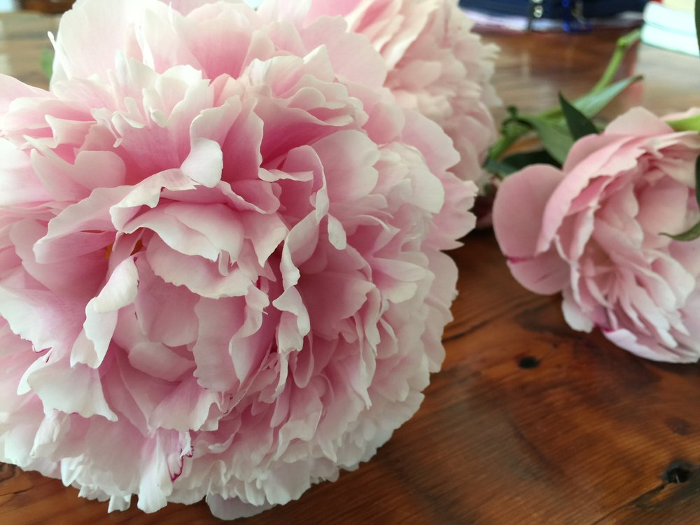 With all the rain this summer, my peonies were amazing!