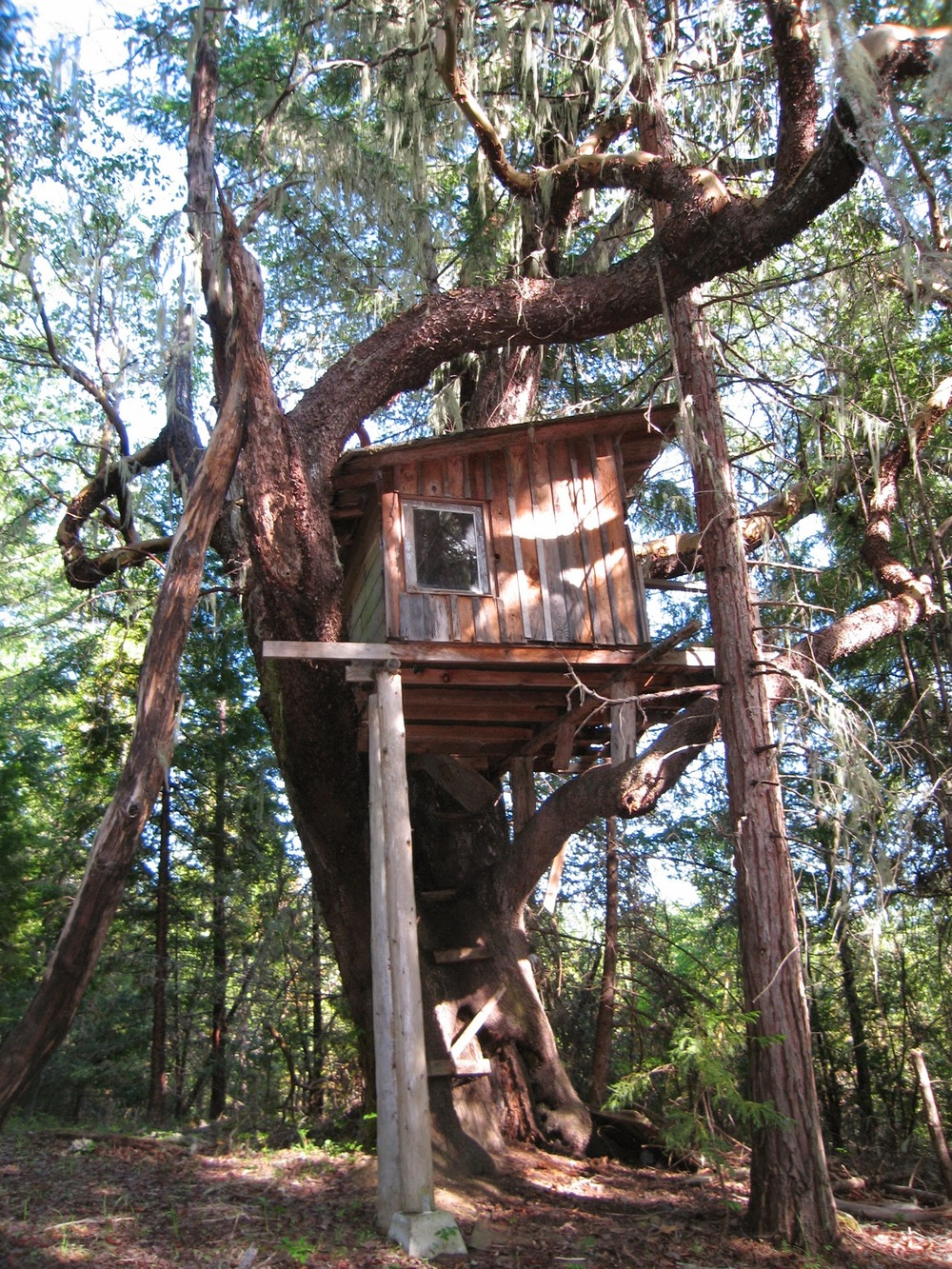 OWL Farm treehouse.jpg