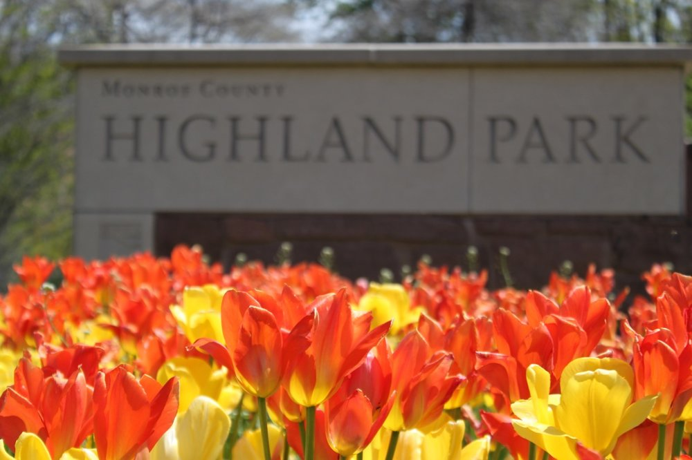 the rochesteriat |  highland park
