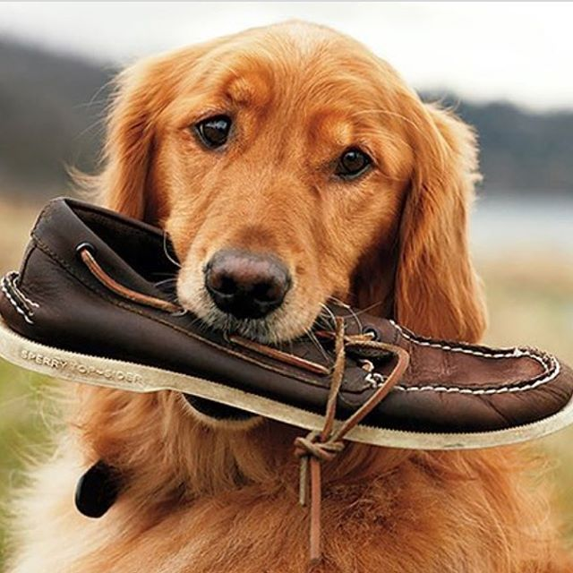 Day of Dogs Pt. 2 . . . #doggo #college #frat #sperry #sorority #tfm #tsm #university