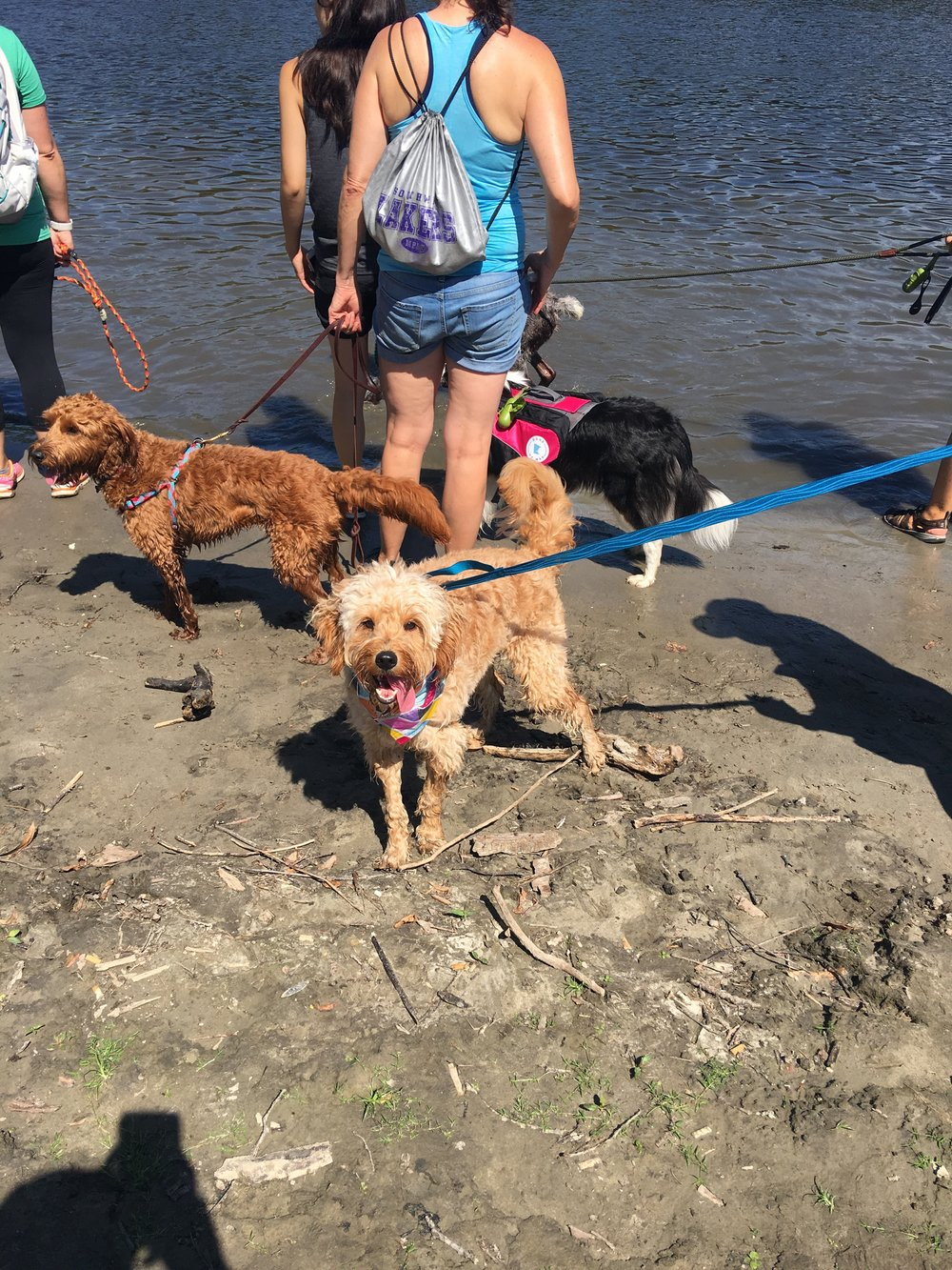 Dogs cooling off at the river!