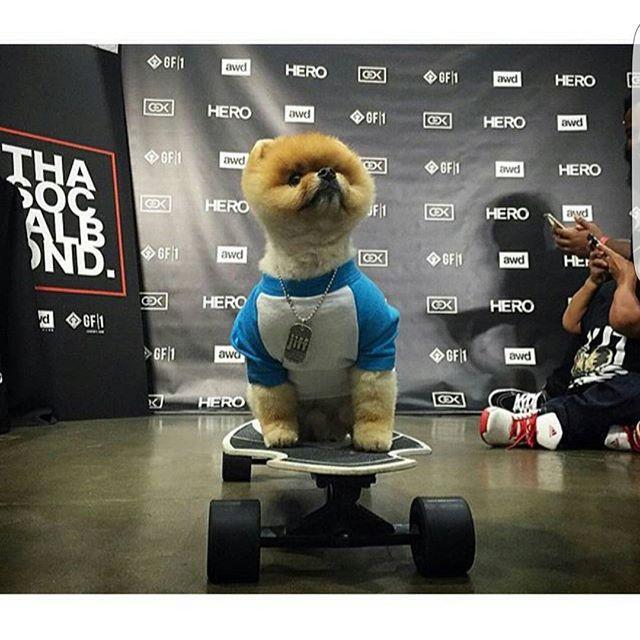 Throw Back Thursday to when @jiffpom was cruising around on the Hero at the @livegf1 booth. #throwbackthursday