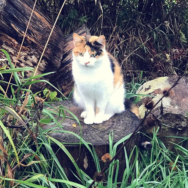 This little kitty was perfection. Now she has a pair of wings💕🕊#photography #photographer #photooftheday #kitty #cat #cats #catsofinstagram #photographylovers #photographyislife #photodaily #calico #beautiful #pretty #kitten #heavenhasanewangel #wings #love