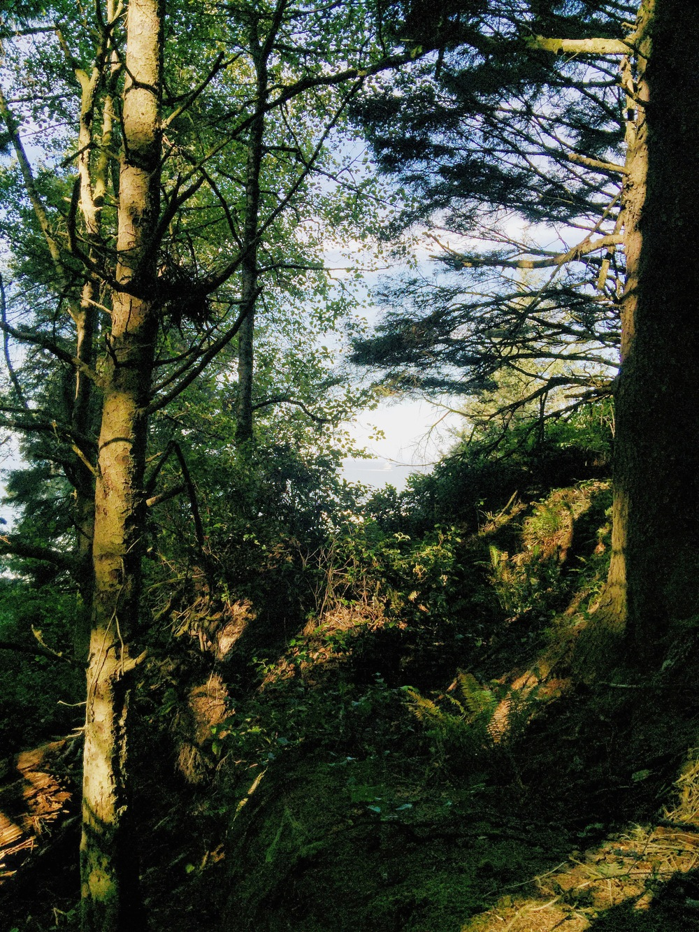 Ecola State Park - liveoregoncoast.com