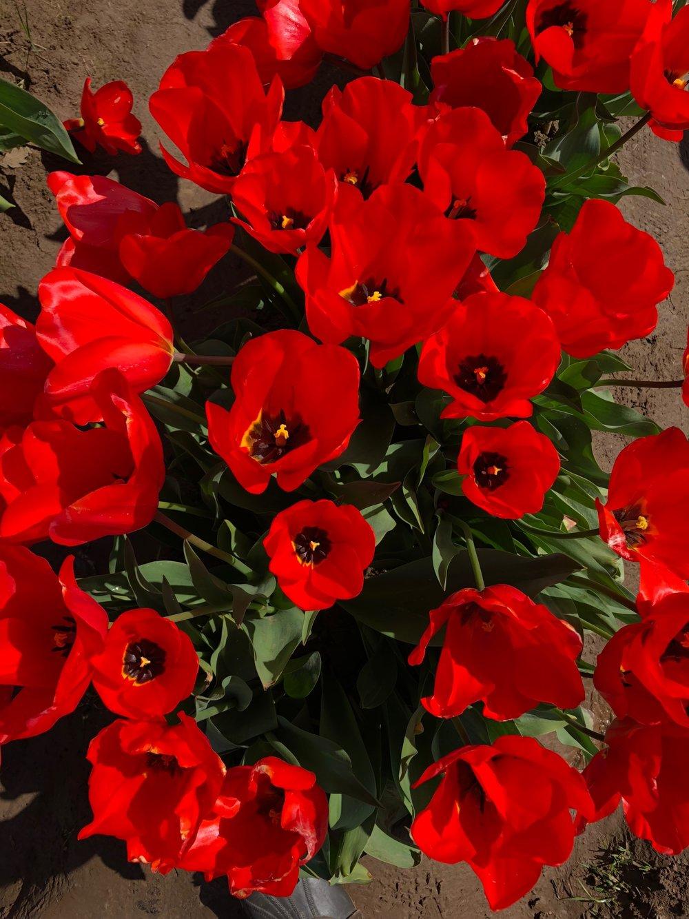 JPEG image-53001E020B2C-10.jpeg
