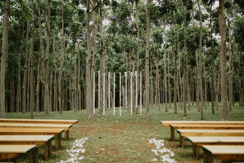 hardwood forest, na aina kai, kauai