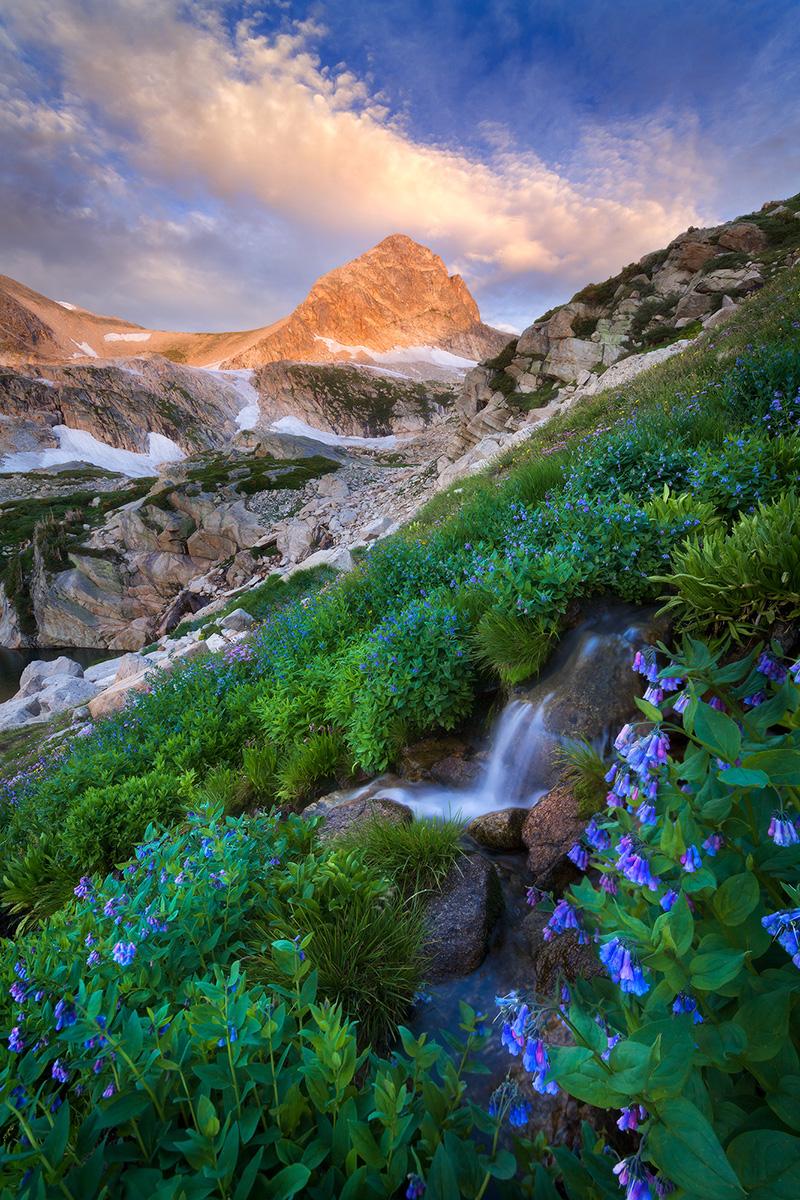 alpine-stream-flowers-indian-peaks