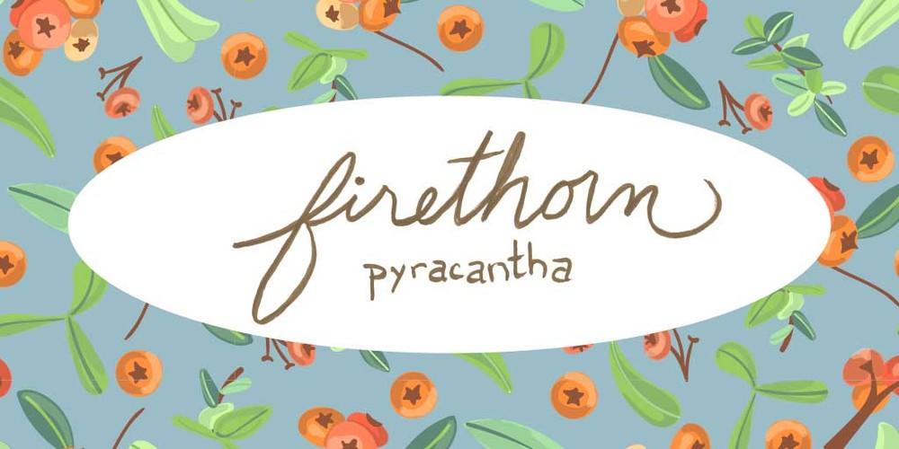 firethorn header