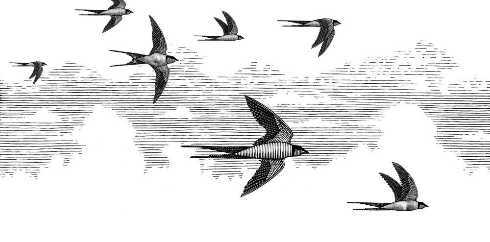 Sky Birds.JPG