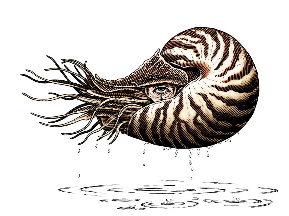 Outta Water, Nautilus