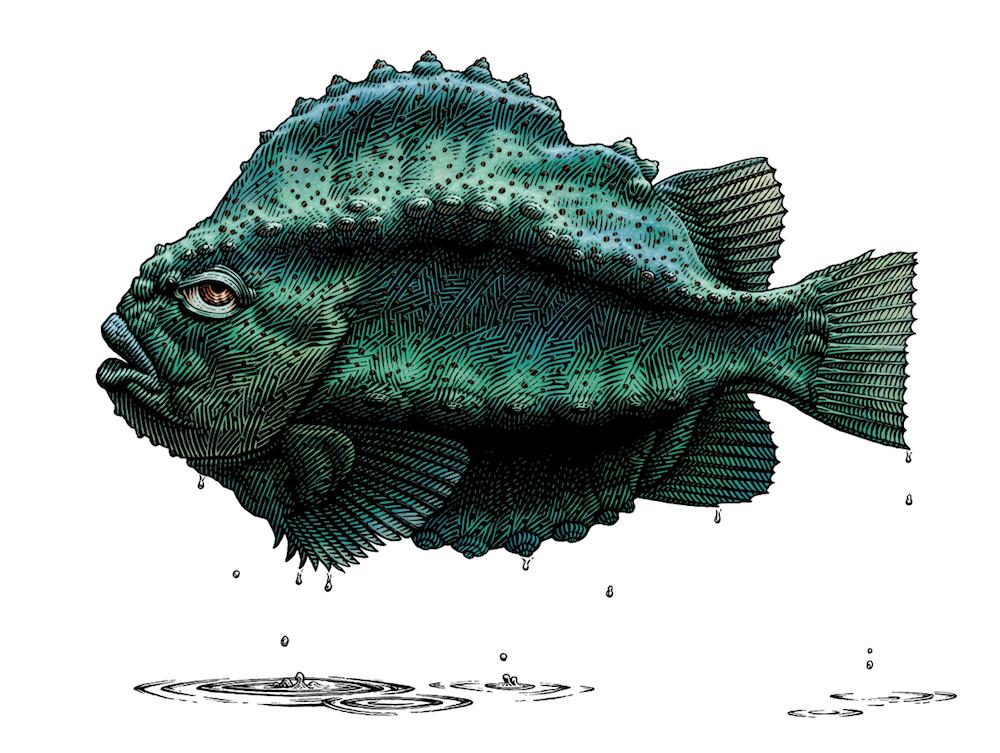 Outta Water, Lumpfish
