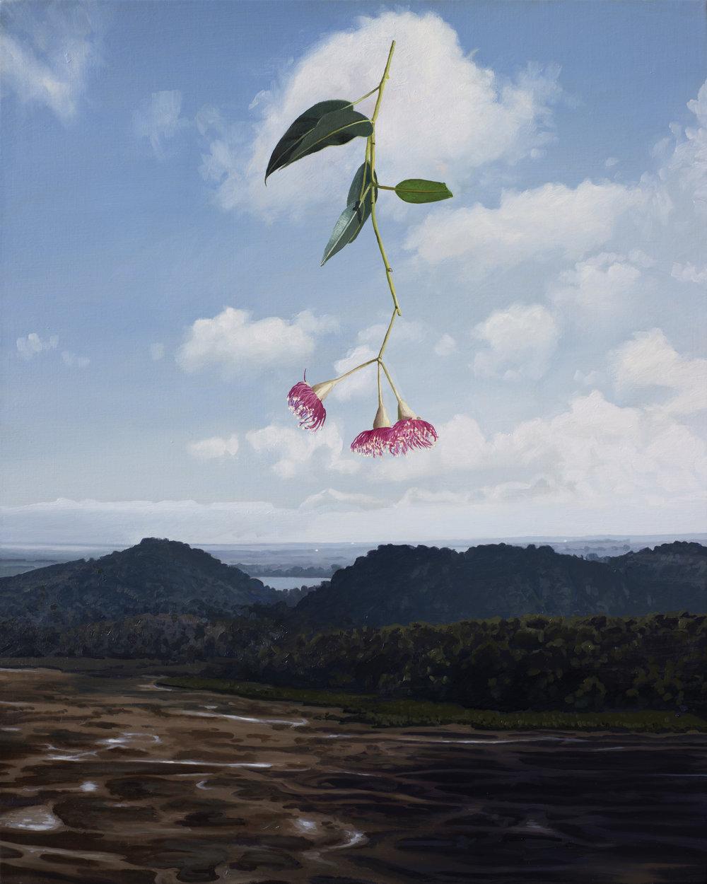 Drought in the Anthropocene : Corymbia Ficifolia