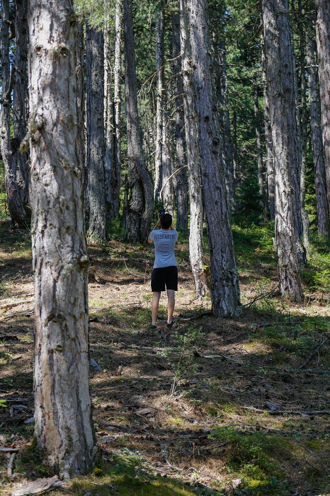 Φωτογραφίσαμε τα πανύψηλα δέντρα...