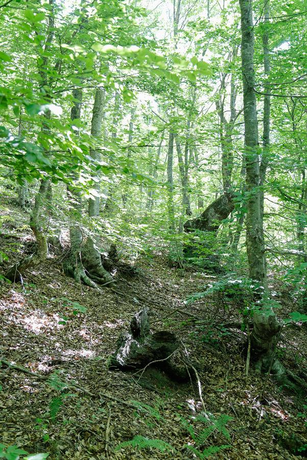 Το κατάφυτο δάσος που εξορμούσαν για κυνήγι οι αρχαίοι Μακεδόνες.
