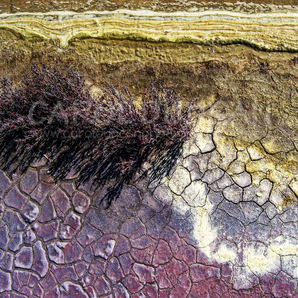 'Cracked' (Shore line of Lake Chillinup,Chillinup Nature Reserve, near Stirling Range) V Ink on maple wood block 203x203mm $75 plus postage
