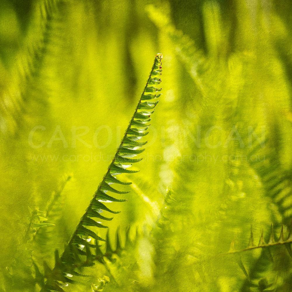 'Green Dreaming' (Fern) UV Ink on maple wood block 254x254mm $85 plus postage