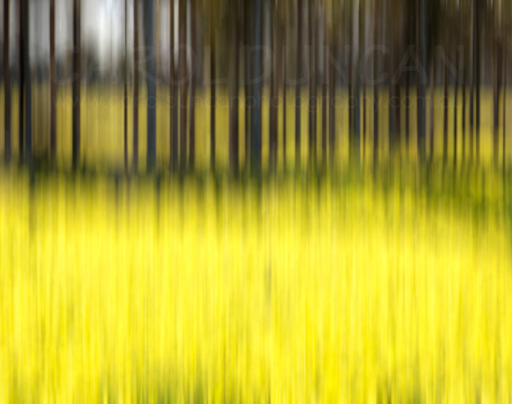 'Mellow Yellow' (Canola field, Great Southern region) UV Ink on maple wood block 355x280mm $85 plus postage