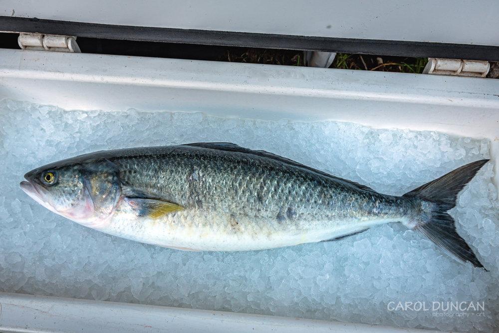 Local salmon, available from Parrys Beach Salmon Denmark