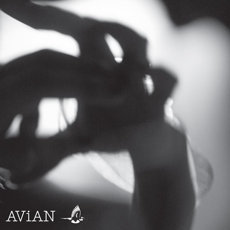 AVN003 - AD/S - Transversal