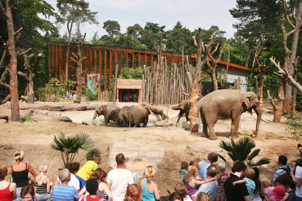 ZOOSITE BENELUX 2012<strong>ZOOSITE Benelux para el proyecto Zoo Amersfoort, Holanda</strong>