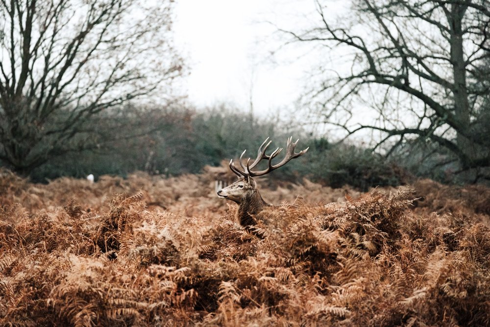 Trade 35 - Laura Maisey: For each trade I take my own selection of photos to capture the location. Laura lived next to the stunning deer of Richmond Park.