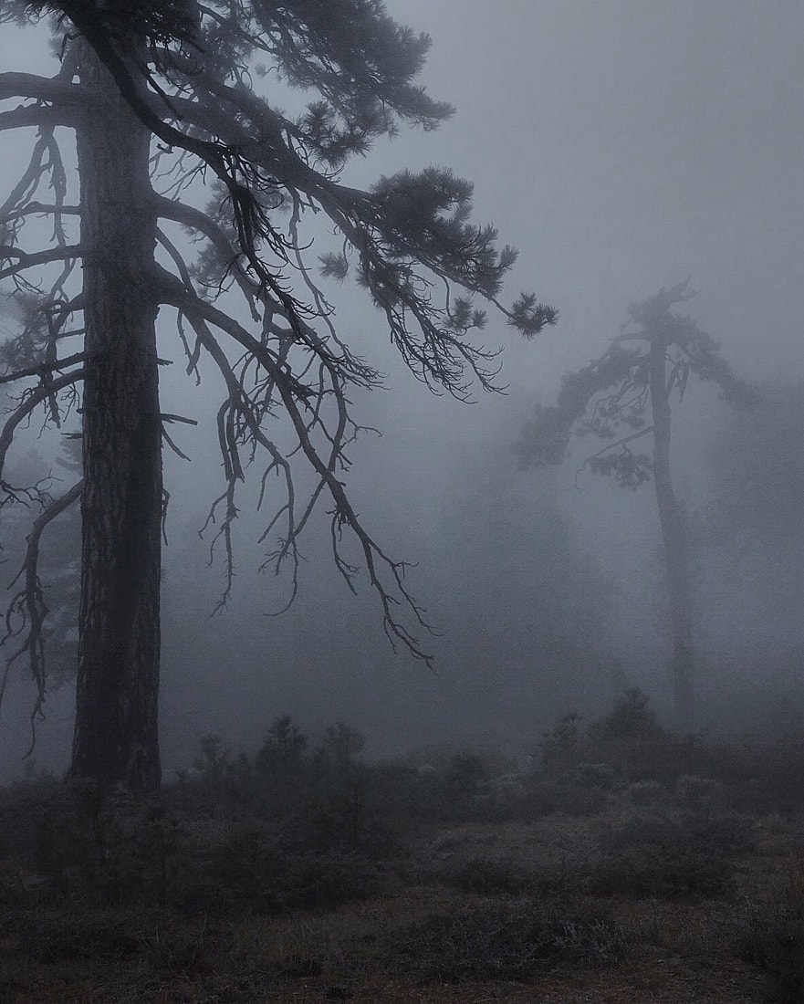 Fog in Wrightwood, CA - Fujifilm XT-1 & XF-23mm f1.4