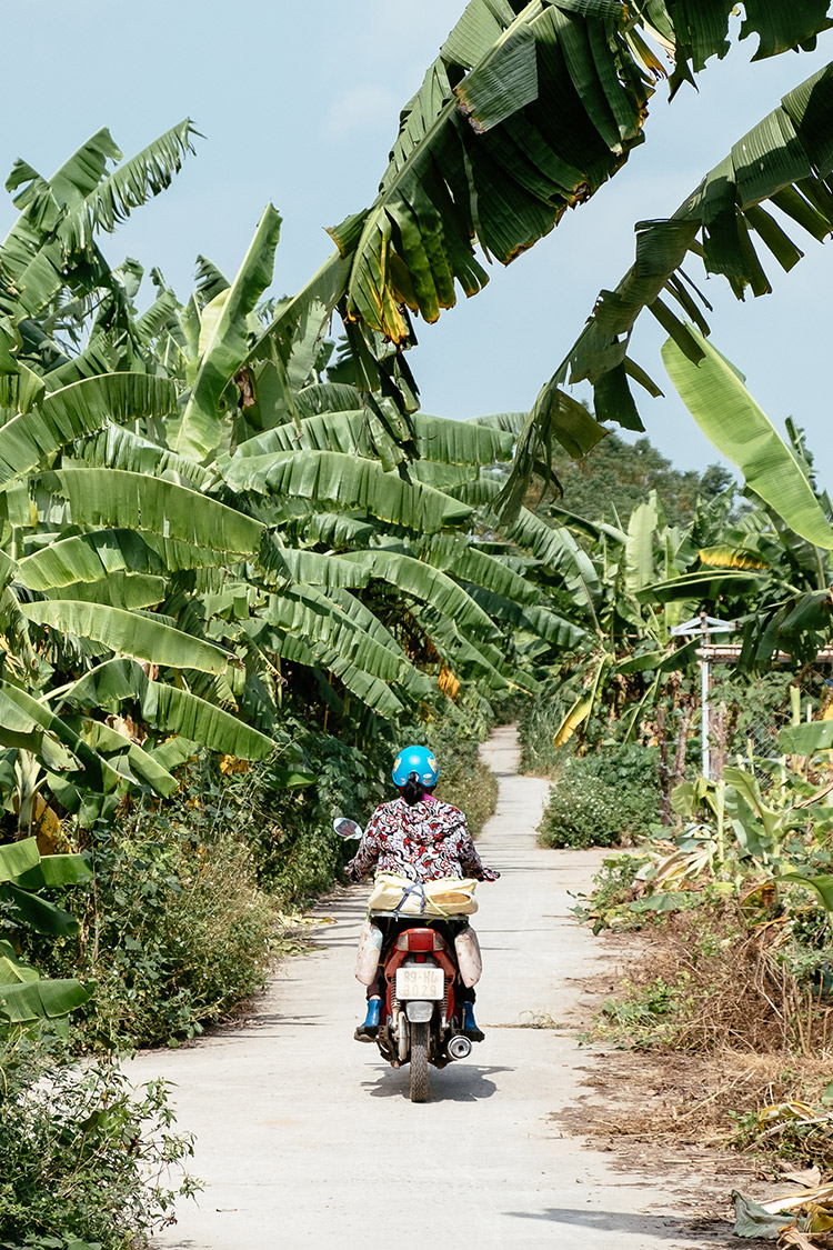 Banana plantation in Hanoi, Vietnam