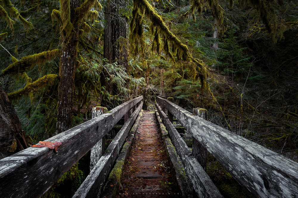 The old wooden bridge and the rain forest, Olympic National Park.
